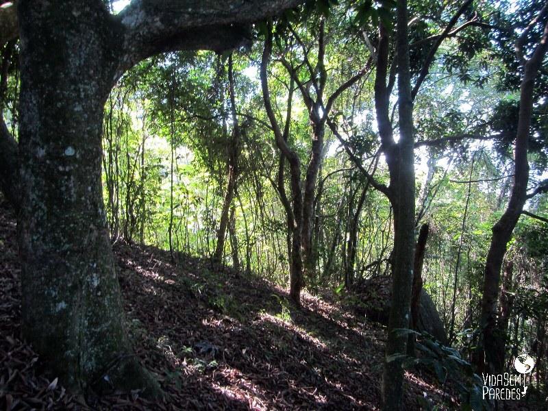 Vida sem Paredes - Trilha Transcarioca parte 2 (17)