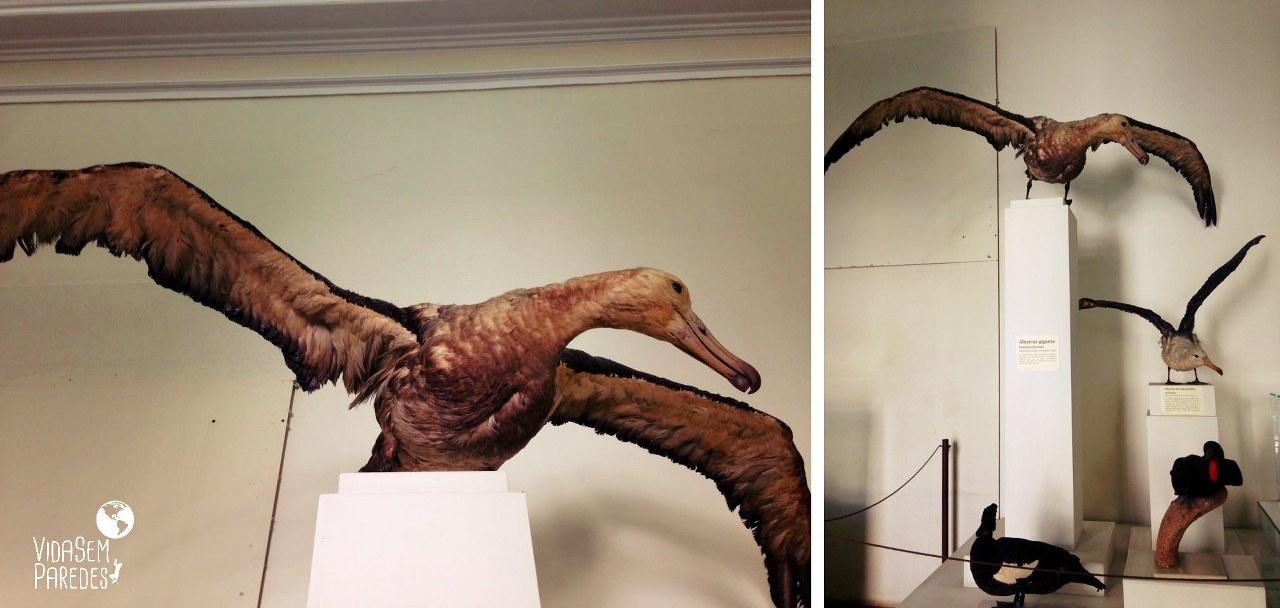 Vida sem Paredes - aves do Museu Histórico Nacional no Rio de Janeiro