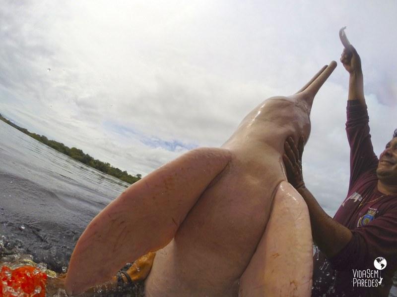 botos em Manaus, Amazônia