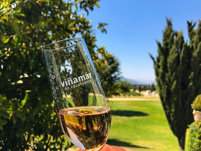 Rota do Vinho no Chile: tour no Valle de Casablanca - Viñamar