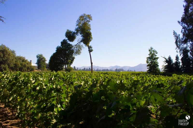 Melhores vinícolas no Valle del Maipo no Chile