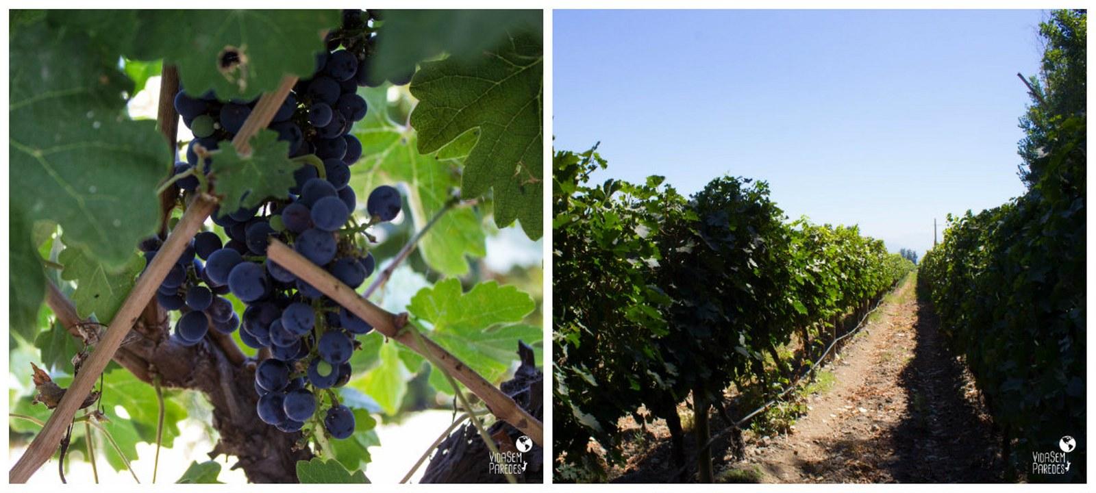 Como é o tour pela vinícola Cousiño Macul, Chile