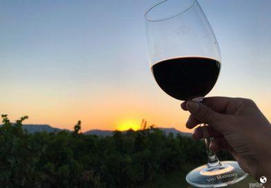 Melhores vinícolas no Vale do Colchagua, no Chile